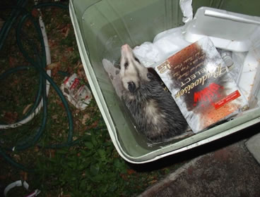 photo of party possum