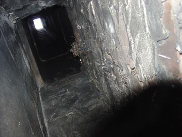 photo of chimney swift nest
